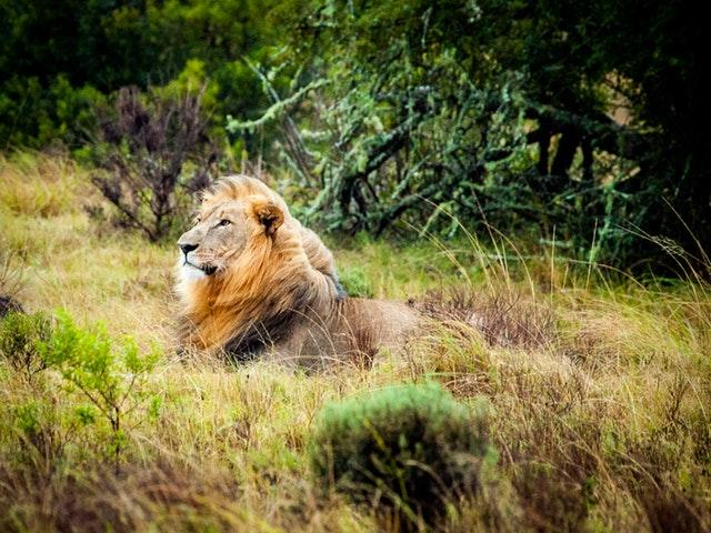 Trakteer je geliefde op een bezoekje aan de Zoo van Antwerpen
