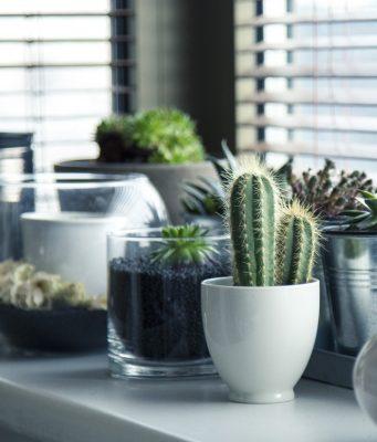 Op zoek naar planten die lang in leven blijven? Ontdek onze 5x tips