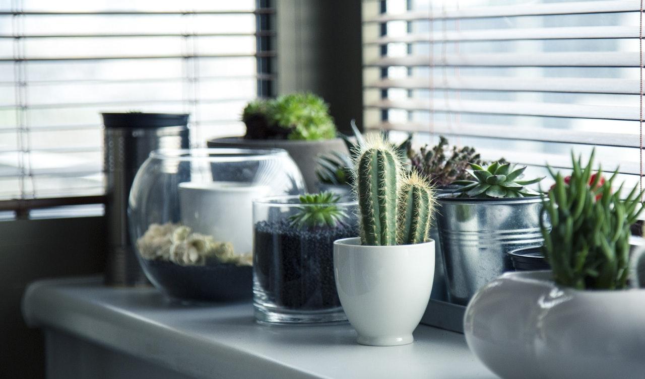 Planten die lang in leven blijven: de cactus als favoriet