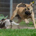 honden-leeftijd-mensenjaren