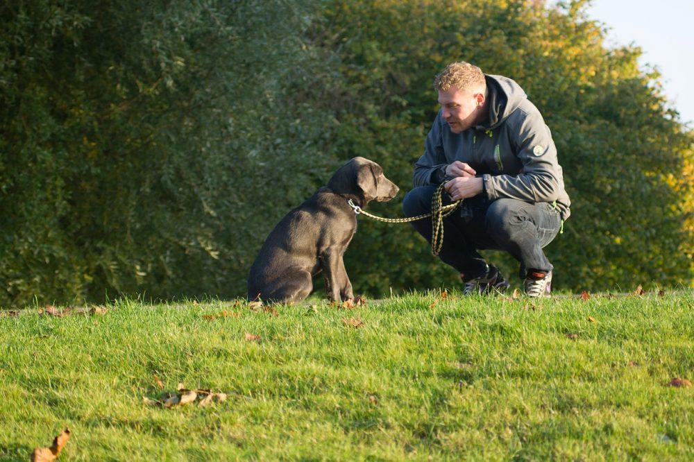 hond-gelukkig-samen