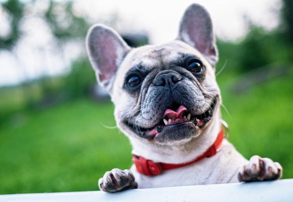 hond-goede-voornemens