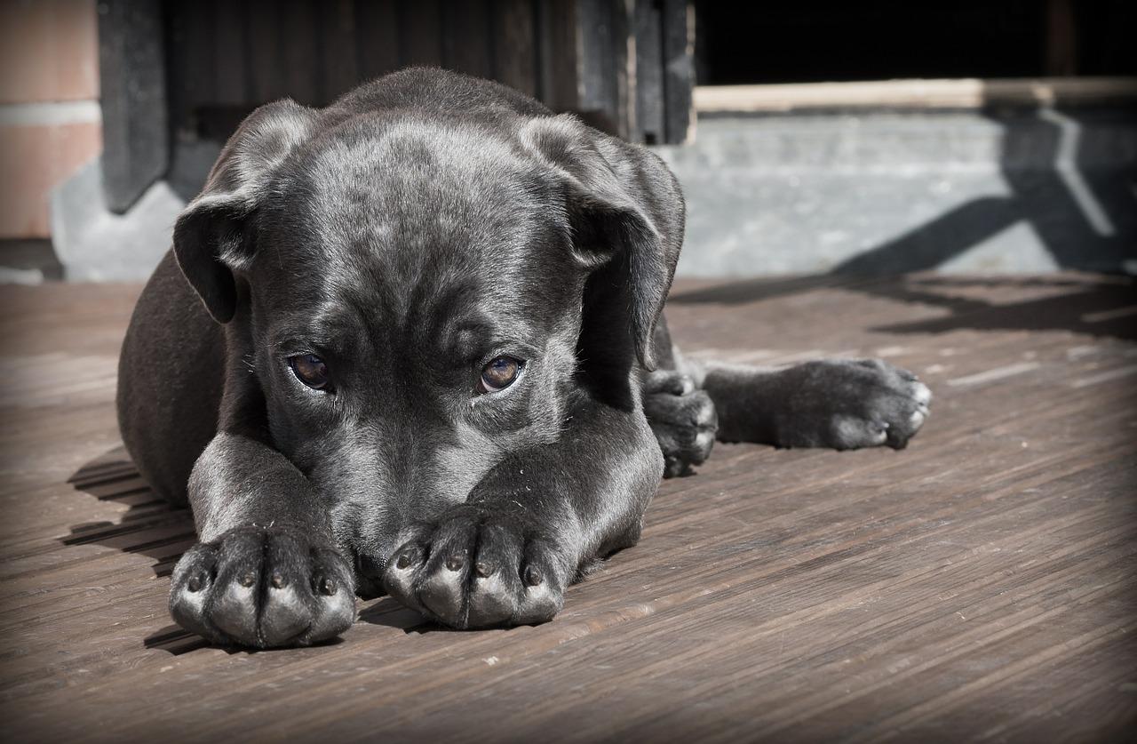 hond-vuurwerk-oud-en-nieuw