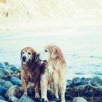hond-zomer-tips