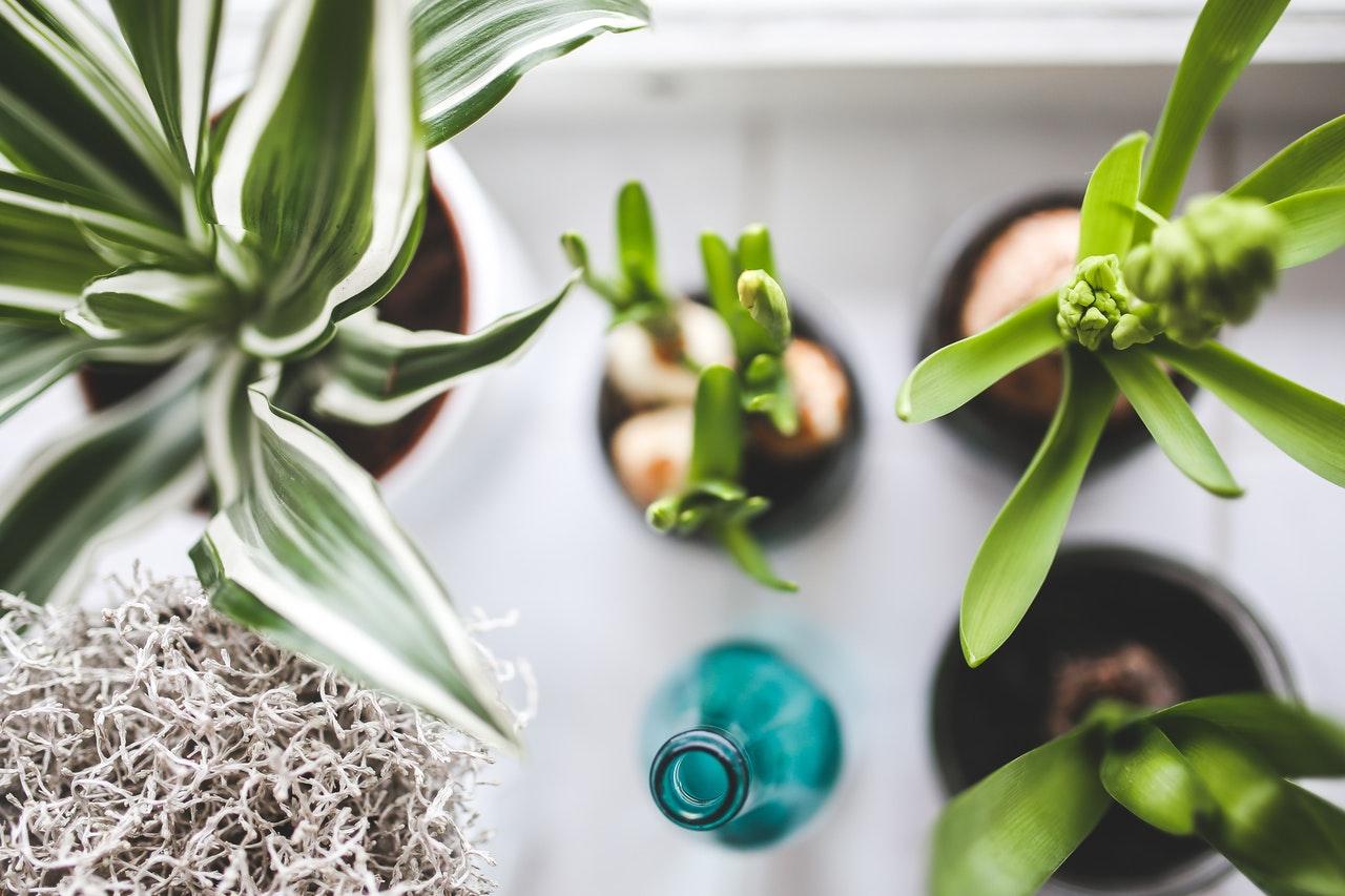 3x originele ideeën voor planten in huis plant styling blogbox