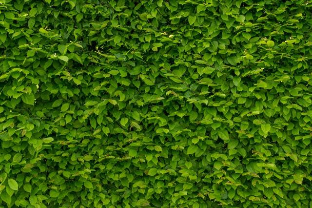 Gewaagd: de groene muur bestaande uit planten