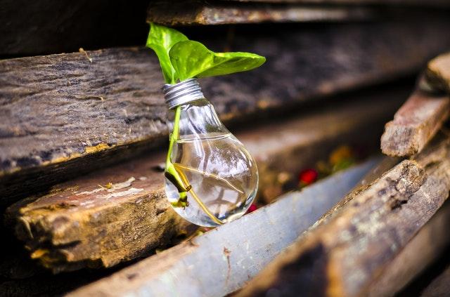 Originele ideeën voor planten in huis: de juiste aankleding