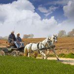 vlaams-paard
