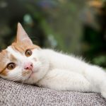 kat-vlooien-bescherming