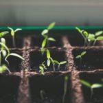 Tips voor planten op het balkon!
