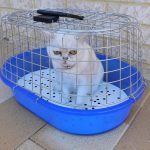 kat-voorbereiden-huisarts-2