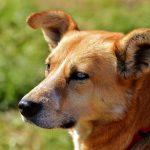 hond-adopteren-voordelen
