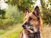 hond-adopteren