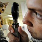 kat-voorbereiden-huisarts