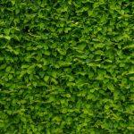 Groen in huis: bijzondere muren met groen!