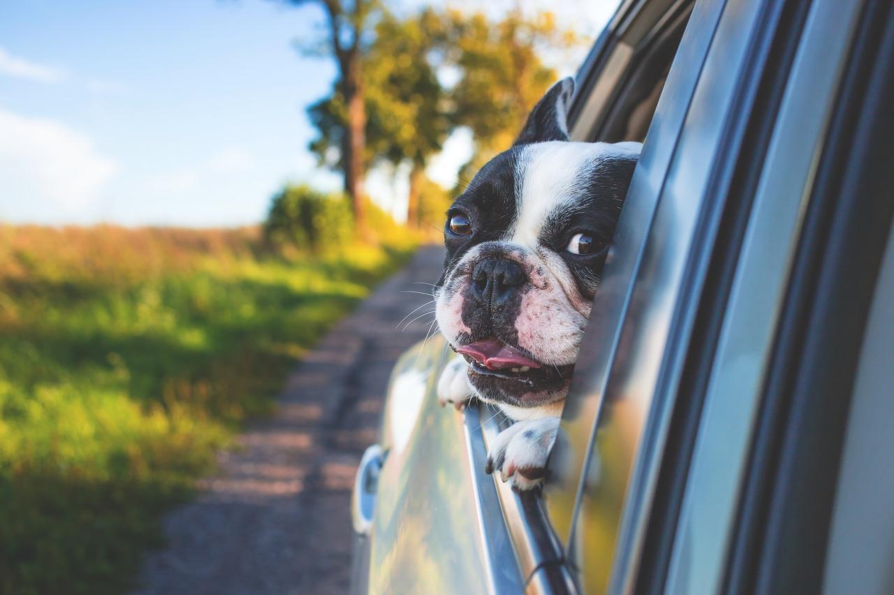 hond-wagenziekte