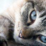 waarom-geeft-een-kat-kopjes