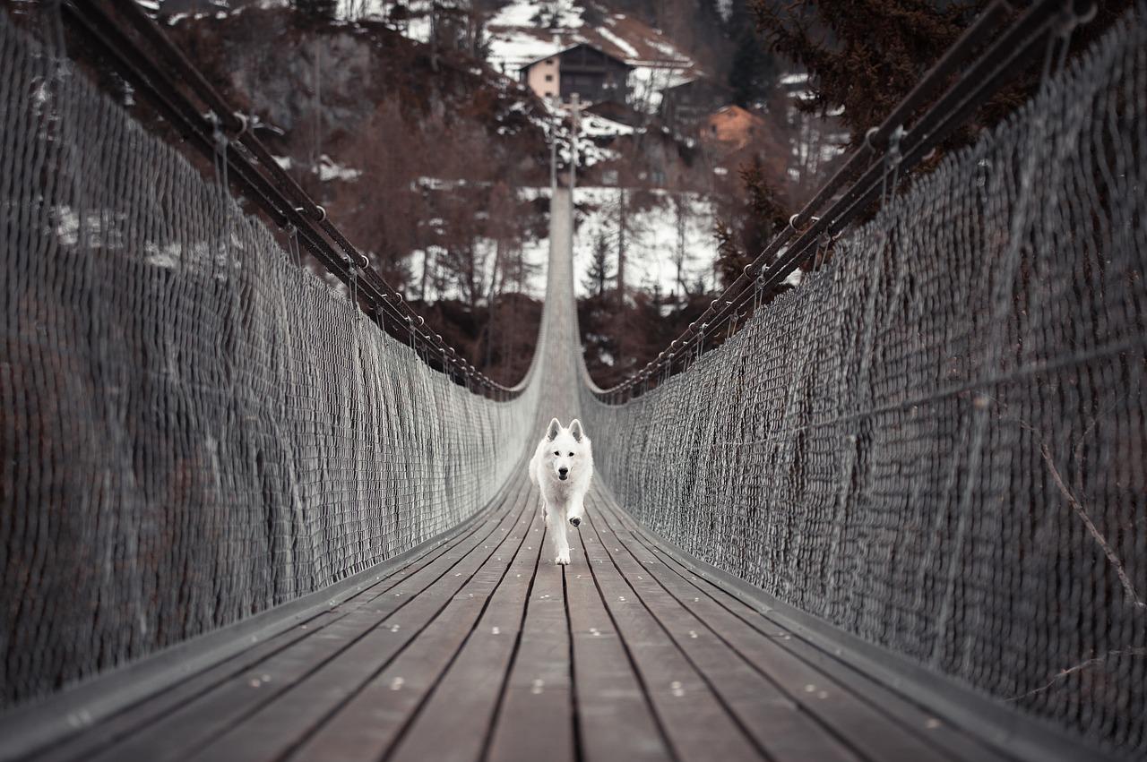 hond-leren-loslopen-3