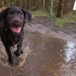 hond-leren-loslopen