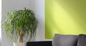 Frisse kleuren in het interieur verwerken: hoe doe je dat?