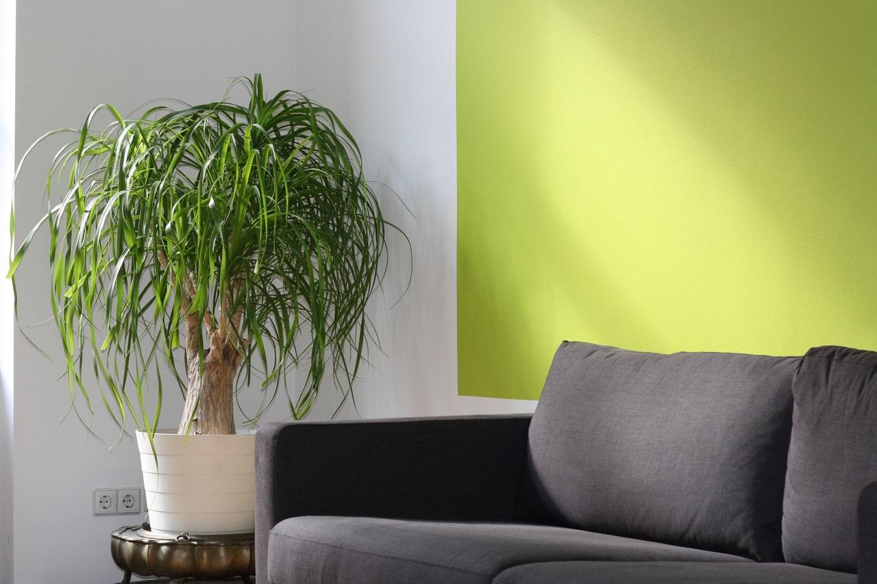 Frisse kleuren in het interieur verwerken: begin bij de muur