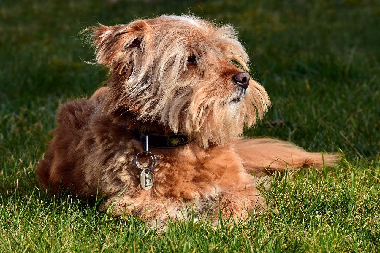 commando-honden-zit