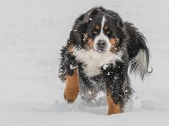 hond-winter