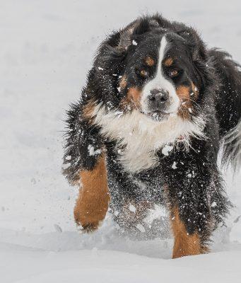 hond-winter