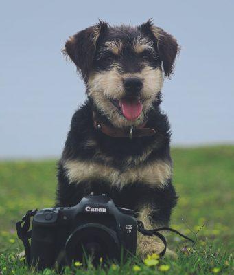 hond-instagram-4