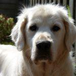 hond-instagram-3