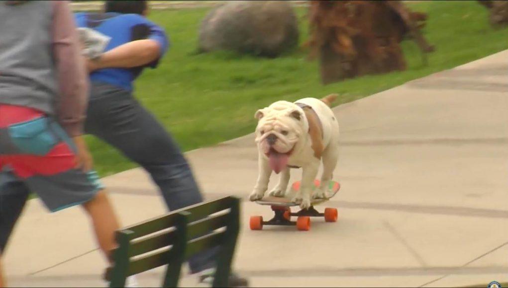 otto-skateboard-2