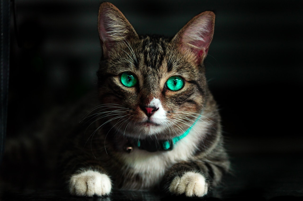kattenbak-2