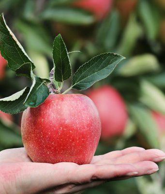 fruit-afvallen-1