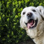 honden-tanden