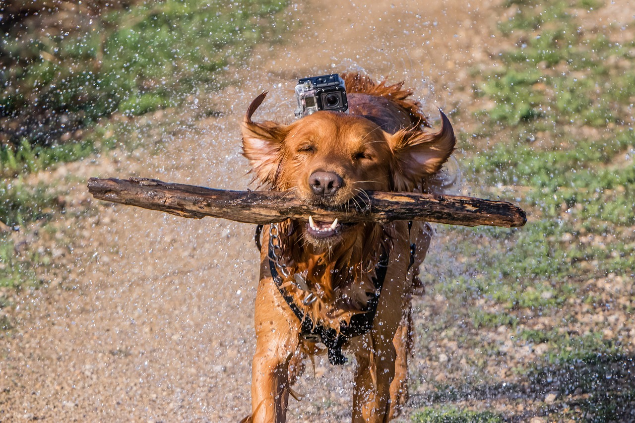 hond-opvoeden-tips-2