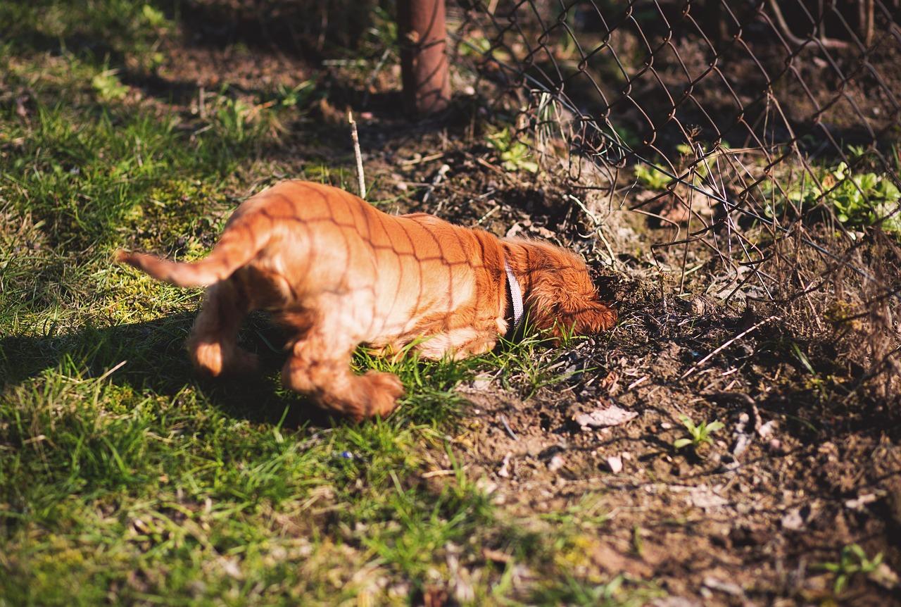 hond-graven-2