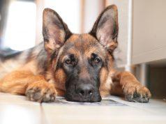 hond-opvoeden-tips