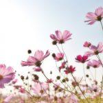 Zelf bloemen plukken: voor meer persoonlijkheid in huis