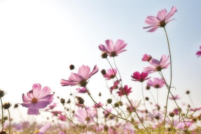 Onze favoriete bloemen in huis: de roos mag niet ontbreken