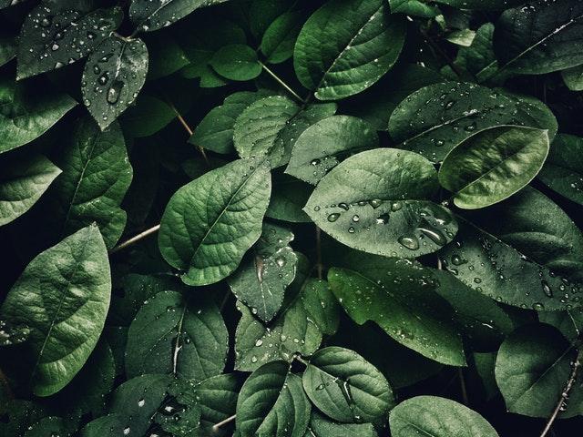 Planten mogen niet ontbreken voor een actieve look in je interieur