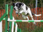 agility-training