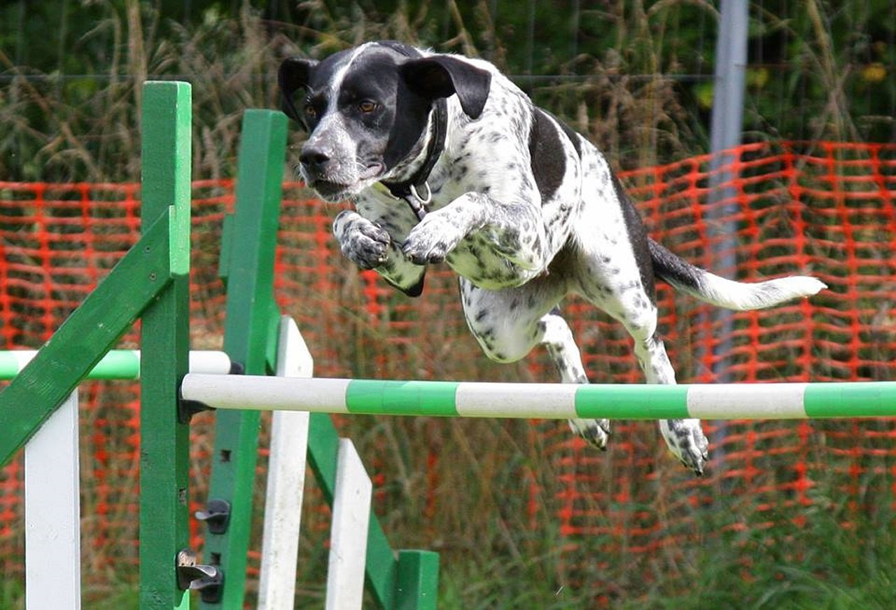 agility-training-2