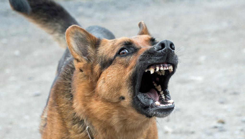 hond-blaffen