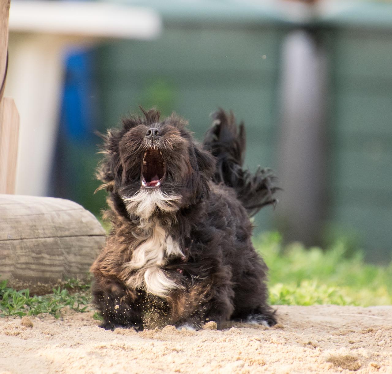 hond-blaffen-2