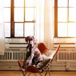 hond stress verminderen