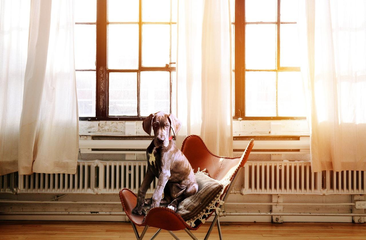 hond stress verminderen 2