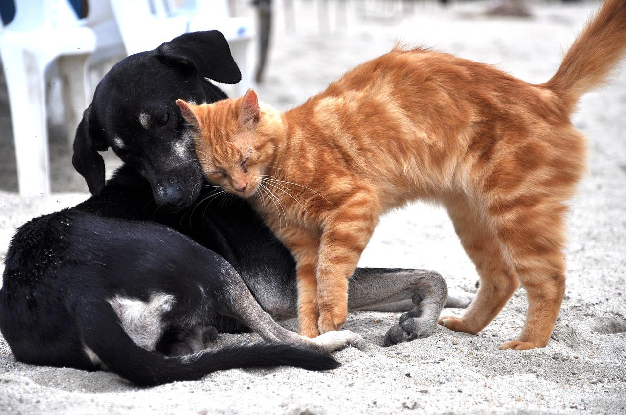 honden-katten