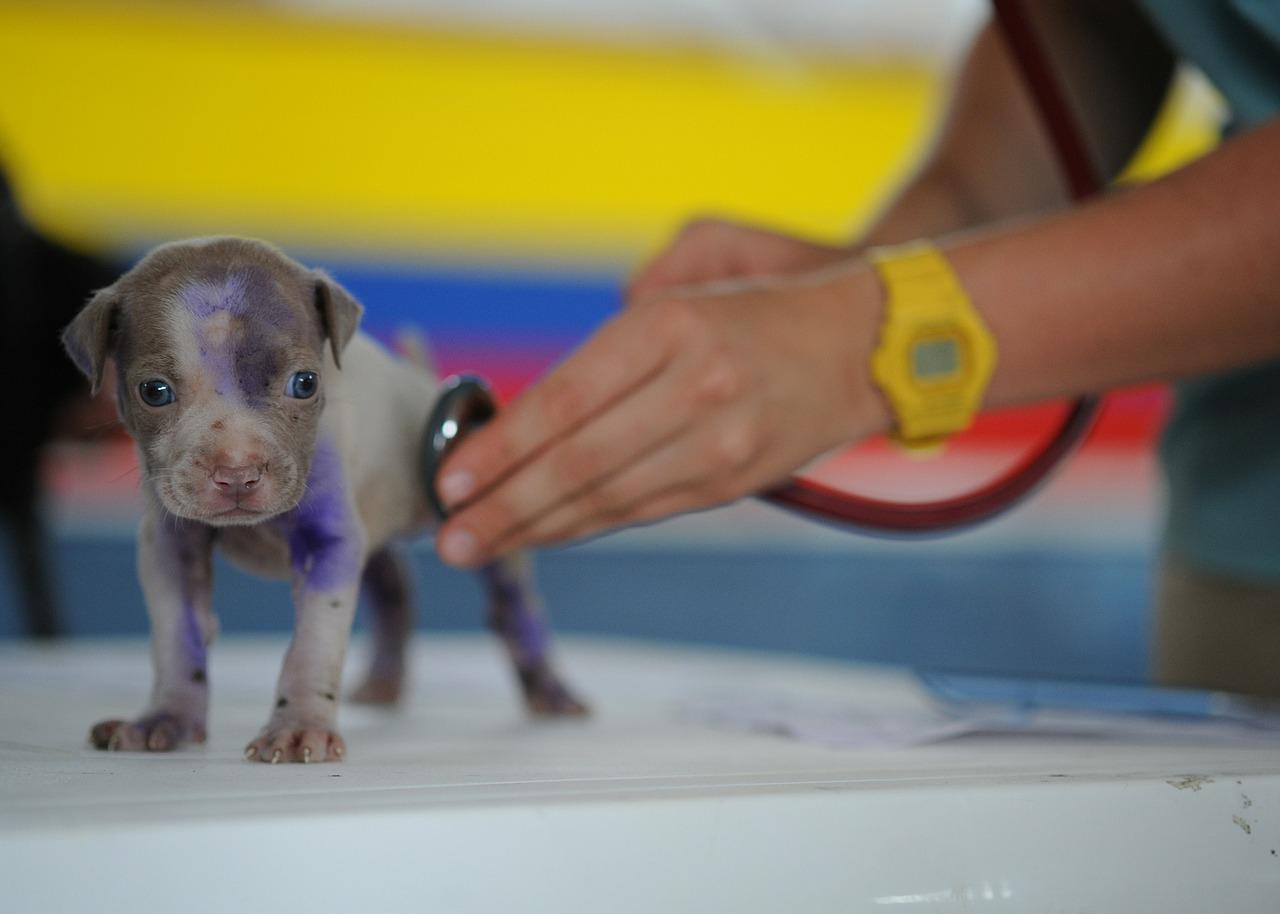 huisdieren verzekering 2
