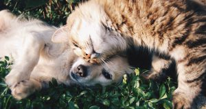 honden-katten-2