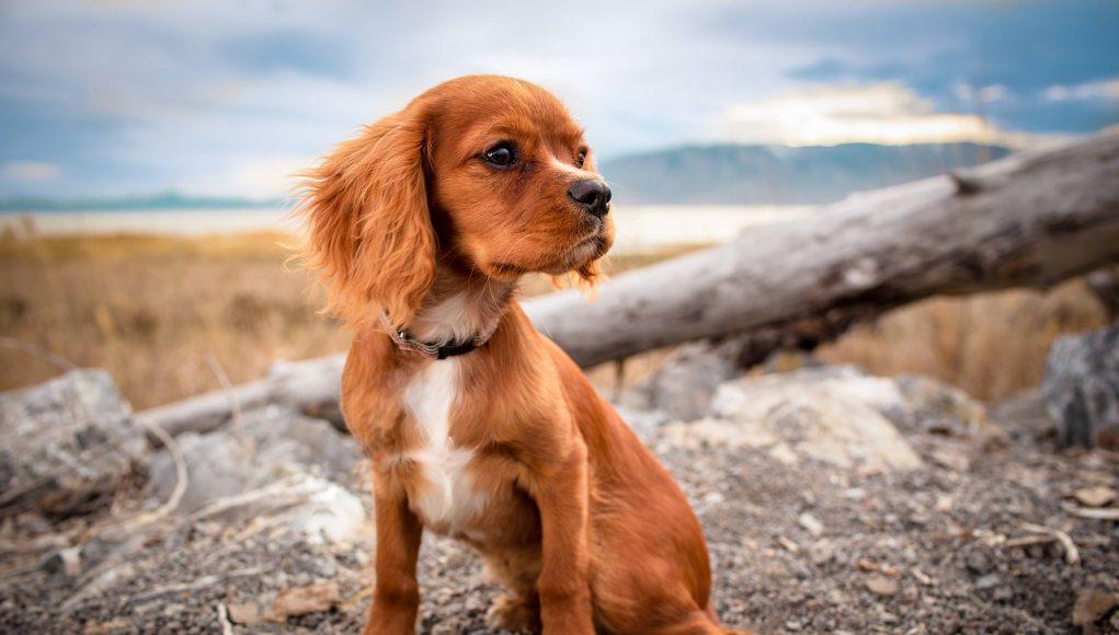 hond aandacht